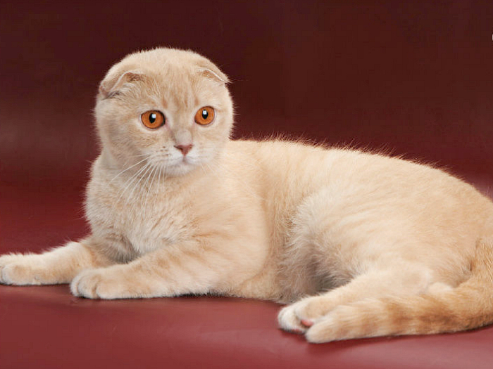 vruće uske slike maca